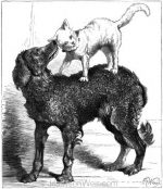 1878 Cat and Dog, by Harrison Weir