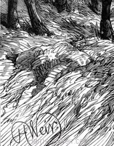 Detail: Chamois, by Harrison Weir