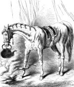 1878 Circus Horse at Astley's by Harrison Weir