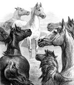 1878 Council of Horses by Harrison Weir