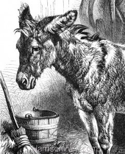 Donkeys Asses and Mules