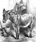 1878 Denis Donovan's Donkey by Harrison Weir