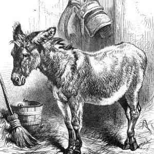 1878 Denis Donovan's Donkey by Harrison Weir