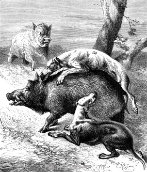 1878 - Dogs hunting the Wild Boar