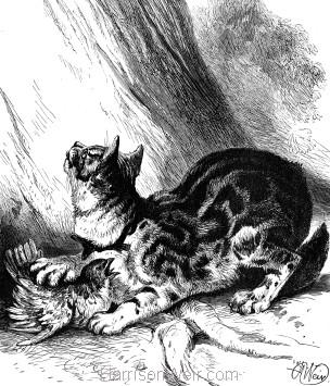 1878 Grimalkin, by Harrison Weir