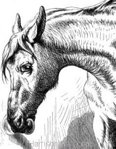 Detail: Horse opening a Door, by Harrison Weir