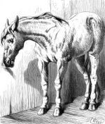1878 Horse opening a Door by Harrison Weir
