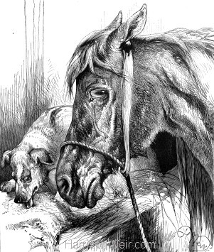 1878 Horse protecting a Dog by Harrison Weir