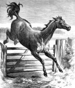 1878 Hunting Mare by Harrison Weir