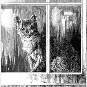 1878 Left Alone, by Harrison Weir