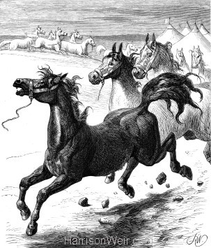 1878 Old Balaclava Jack by Harrison Weir