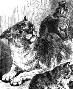 Detail: 1878 Pussy's Strange Family, by Harrison Weir
