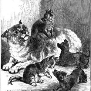 1878 Pussy's Strange Family, by Harrison Weir