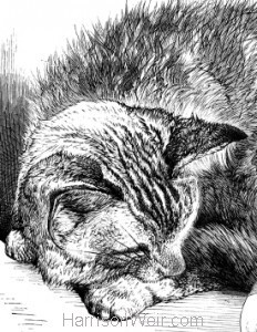 Detail: Pussy Asleep, by Harrison Weir