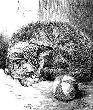 1878 Pussy Asleep, by Harrison Weir