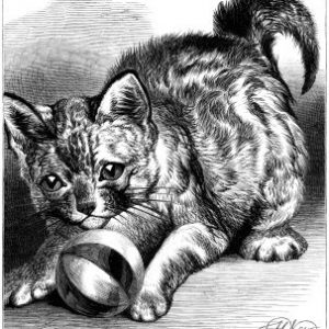 1870 Pussy at Play, by Harrison Weir