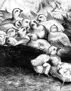 Detail: Rover and the Chicks by Harrison Weir