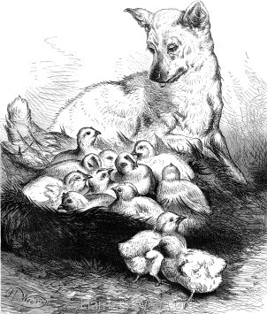 1878 Rover and the Chicks by Harrison Weir
