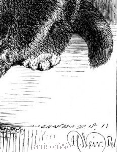 Detail: Royal Tom, artists signature, Harrison Weir