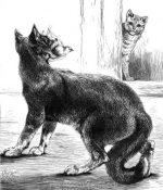 1874 Sagacity of a Cat, by Harrison Weir