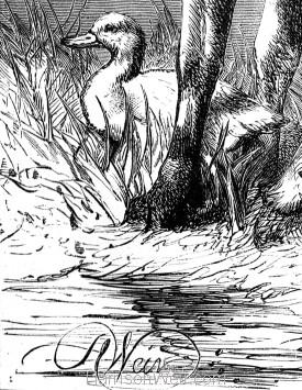 Detail: Sheep and Blackbird, by Harrison Weir