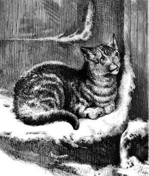 1878 Shut out, by Harrison Weir