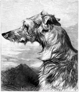 1878 The Scottish Deer Hound by Harrison Weir