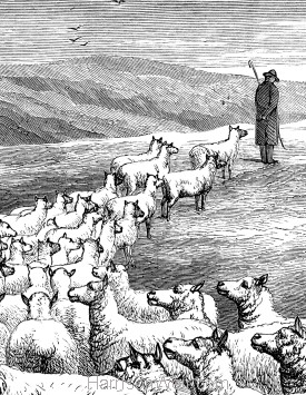 Detail: Sheep following the Shepherd, by Harrison Weir