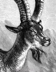 Detail: The Ibex, by Harrison Weir