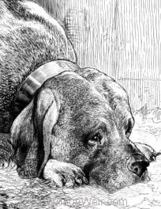 Detail: The Mastiff, by Harrison Weir
