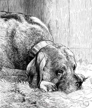 1873 The Mastiff, by Harrison Weir