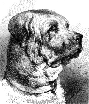1878 The Mastiff, by Harrison Weir