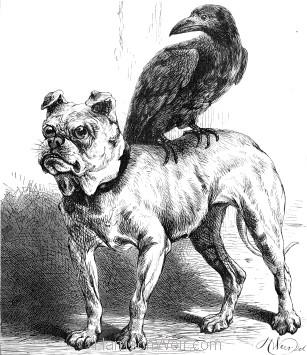 1878 A Sociable Rook, by Harrison Weir