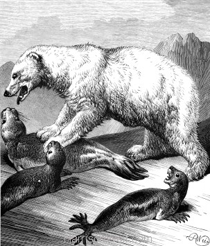 1878 The Arctic or White Bear, by Harrison Weir