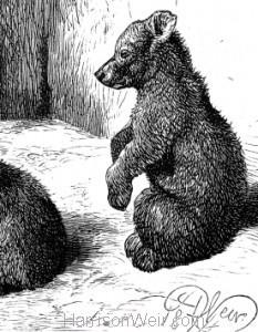 1874 The Brown Bear, by Harrison Weir