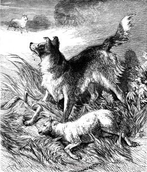 1878 The Criminal Dog, by Harrison Weir