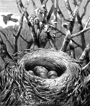 1878 The Cuckoos egg in the Hedge-Sparrow's nest, By H.Weir