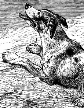 Detail: The Dog and the Donkey, by Harrison Weir