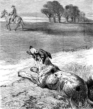 1878 The Dog and the Donkey, by Harrison Weir