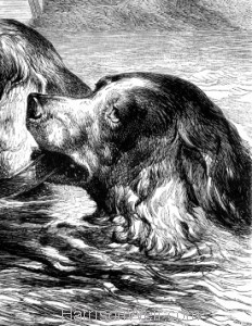 Detail: The end of a Dog's quarrel, by Harrison Weir