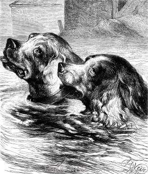 1874 The end of a Dog's quarrel, by Harrison Weir