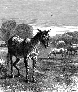 1878 The Faithful Friend, by Harrison Weir