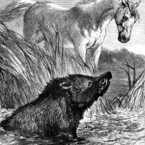 1878 The Horse and the Boar, by Harrison Weir