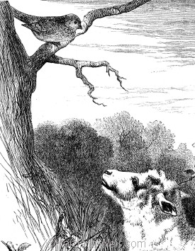 Detail: The Lamb and the Linnet, by Harrison Weir