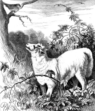1878 The Lamb and the Linnet, by Harrison Weir