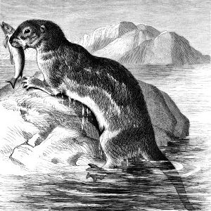 1878 The Otter, by Harrison Weir