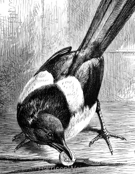Detail: The Robber Magpie, by Harrison Weir