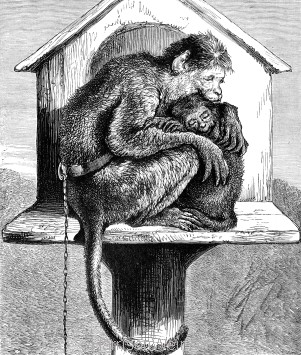 1878 The Sick Monkey by Harrison Weir