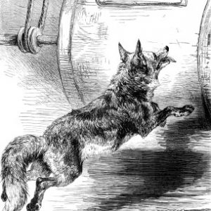 1878 The Sly Fox, by Harrison Weir