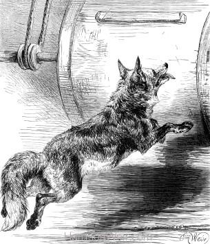 1878 The Sly Fox, by Harrison Weir